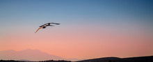 Seagull  Flying In Sunset Over The Sea