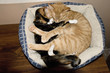 cats and kittens snuggling with each other