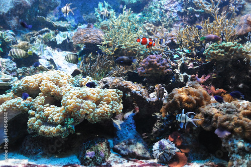 Foto op Canvas Onder water colorful coral reef underwater and fish