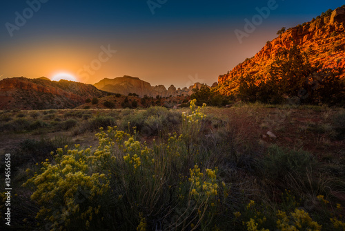 Spoed Foto op Canvas Natuur Park Zion National Park Fall wild flowers at Sunrise