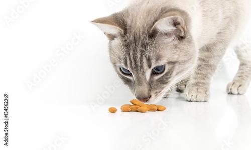 Fotografie, Obraz  Katze frisst Trockenfutter.