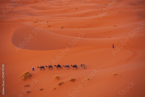 Spoed Foto op Canvas Baksteen Camel caravan in the Sahara