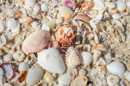 Fotografia, Obraz  Persian Gulf Sea Shells 3