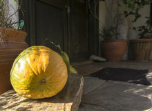 Yellow Gourd At The House Door
