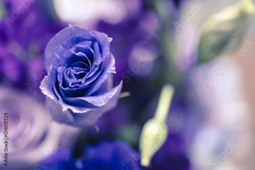 Purple rose - 134608524