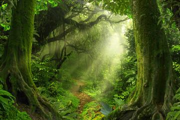 Tropikalna dżungla