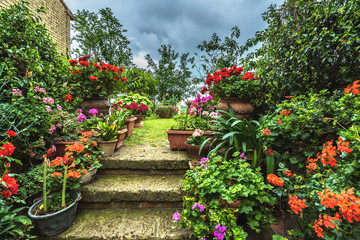 Fototapeta Uliczki Flower filled streets of the old Italian city in Tuscany.