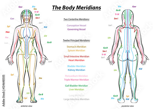 MERIDIAN SYSTEM CHART - Female body with principal and centerline acupuncture meridians - anterior and posterior view - Traditional Chinese Medicine Canvas Print