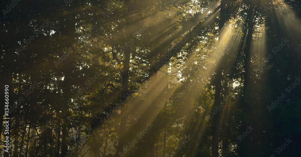 Fototapety, obrazy: Sunbeams