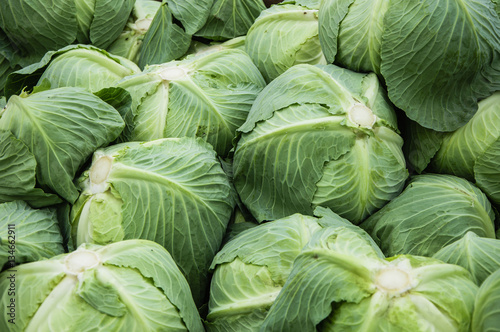 The cabbage closeup