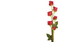 Border Of Long Stem Roses Isol...