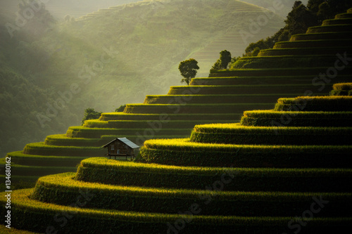 The Rice Fields On Terraced Of Mu Cang Chai, In Northern Vietnam.