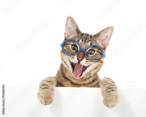 Poster Kat Happy bengal cat wearing glasses looking over a sign
