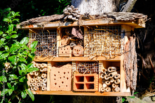 Photo  insect house