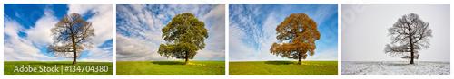 Foto  Vier Jahreszeiten - Collage
