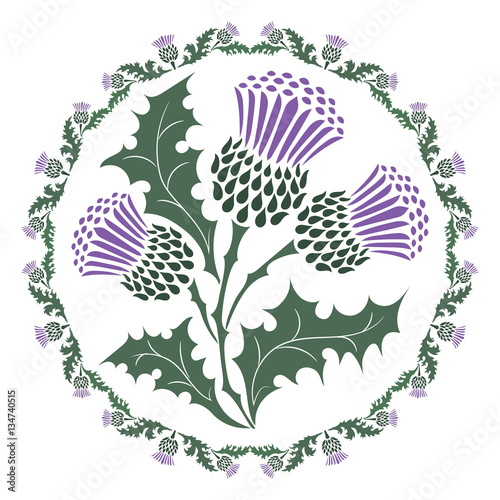Canvas Print Thistle flower and ornament round leaf thistle
