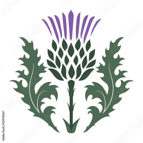 Stampa su Tela Thistle. Onopordum acanthium. Scottish Thistle