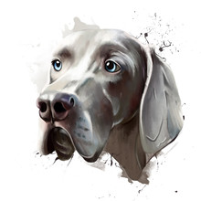 Portrait Of A Dog Of The Breed, Closeup On A White Background, With Elements Of Spray Paint. As A Print On Clothes, Mug Or Hoodie