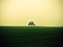 árbol Solitario En Una Pradera