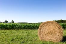 Hay Bale In Corn Field