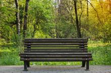 Bench In Spring Park