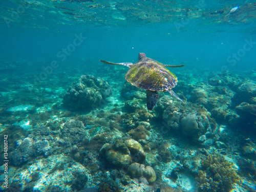 undersea image of sea turtle in coral reef for banner template buy