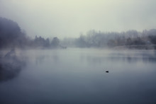 Silhouette Of A Lonely Duck In The Fog.