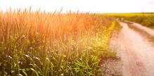 Empty Path Passing Through Fie...