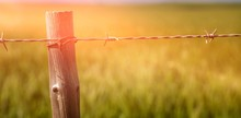 Close Up Of Fence In Field