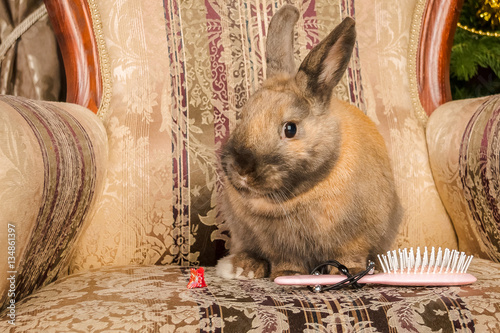 Photo Bunny Barber