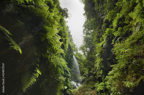 Spain, Canary Islands, La Palma, cascade in tropical forest