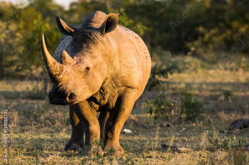 Cadres-photo bureau Rhino Rhino At Sundown
