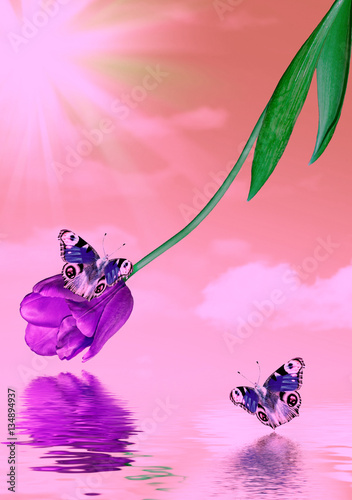 Foto op Canvas Purper Bright and colorful spring flowers tulips. Landscape.