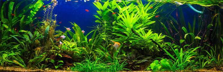 ryby w akwarium słodkowodnym z piękną zieloną roślinnością tropica