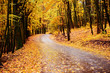 autumn alley. Sunlight breaks through the autumn leaves of trees