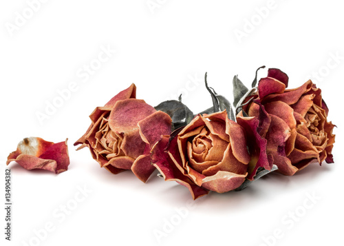 Fototapeta na wymiar dried rose flower head isolated on white background cutout