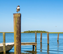 Seagull Bird On Dock Post Along The Water In Florida