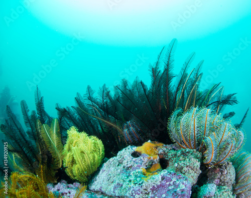 Feather star Canvas Print