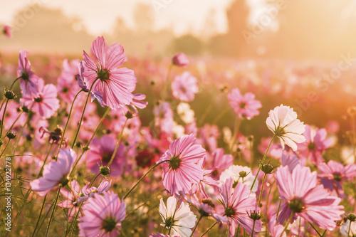 Szare   piekne-kwiaty-na-polu