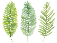 Vector Set Of Watercolor Leave...