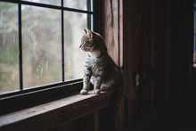 Kitty Looking Out Window