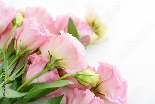 Fototapeta 美しい花 obraz na płótnie