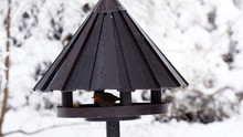 Robin Bird In A Birdhouse With Wooden Round Roof In Wintertime.