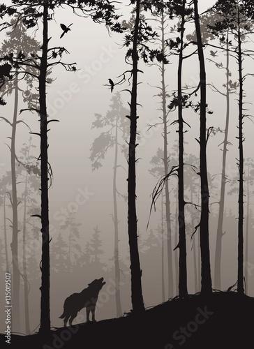 czarno-biale-zdjecie-wilk-w-lesie