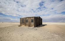 Desert Abandon