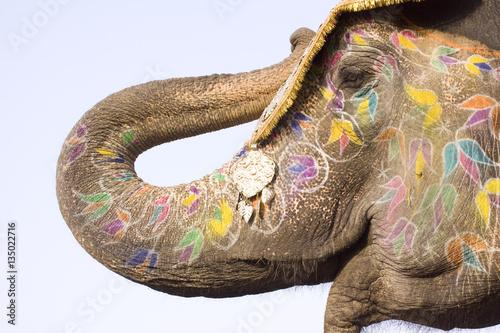 Foto op Aluminium India colorful elephant , festival , Jaipur, Rajasthan, India