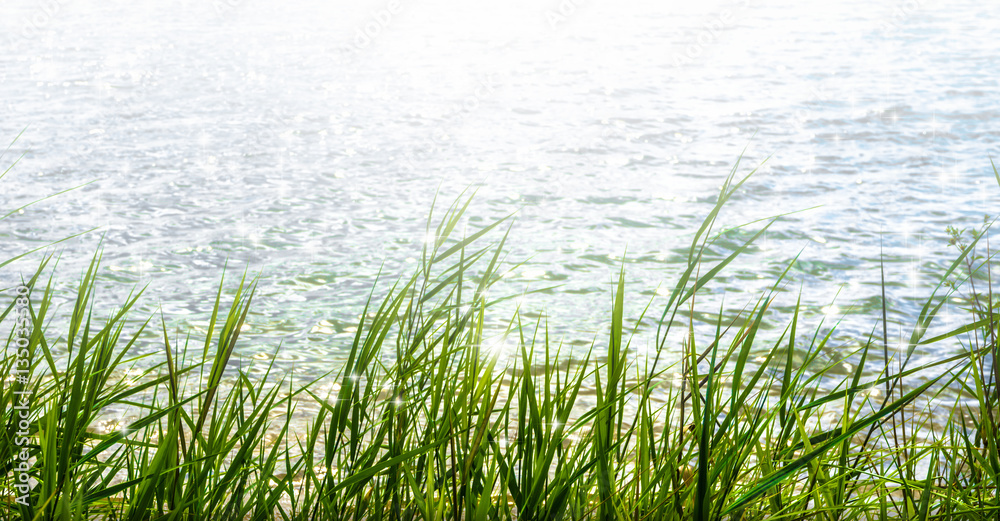 Fototapety, obrazy: sunshine in water surface