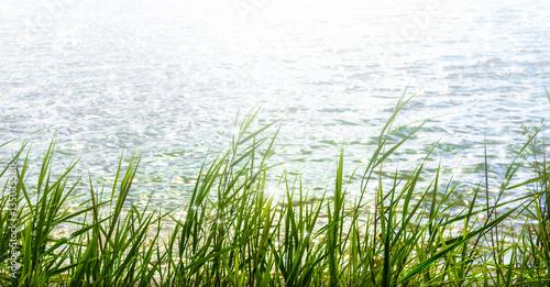 Cuadros en Lienzo sunshine in water surface