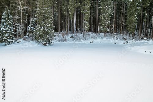 Valokuvatapetti Swiss Winter - Forest covered in snow