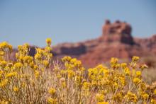 Wild Flowers, Utah Landscape
